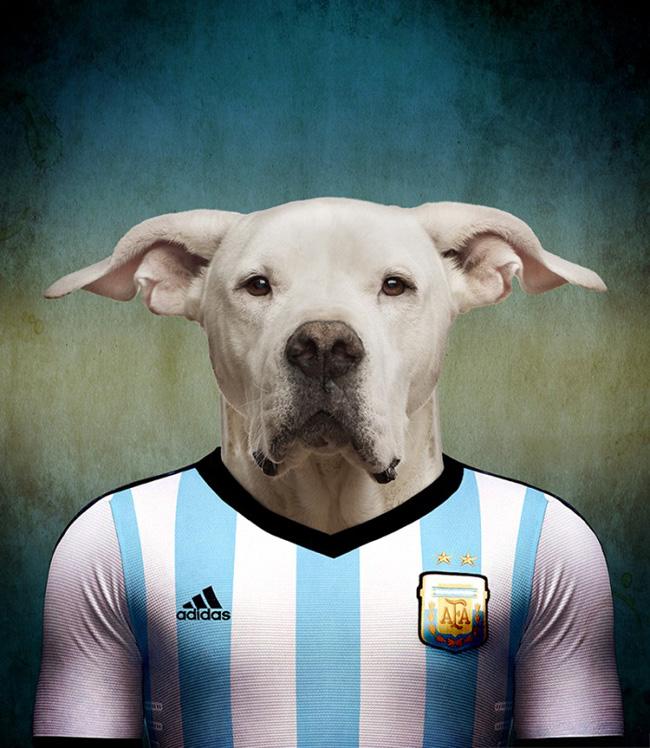 dogo_argentino