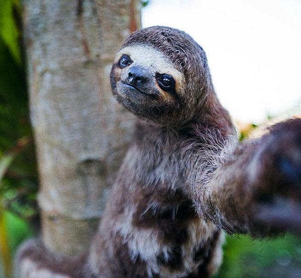 selfies_raras_26