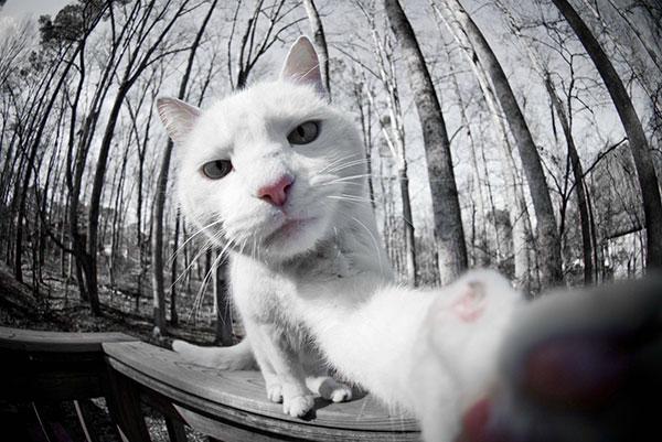 selfies_raras_4