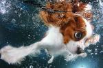 fotos_perros_bajo_el_agua
