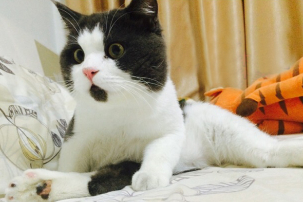 el_gato_que_vive_sorprendido