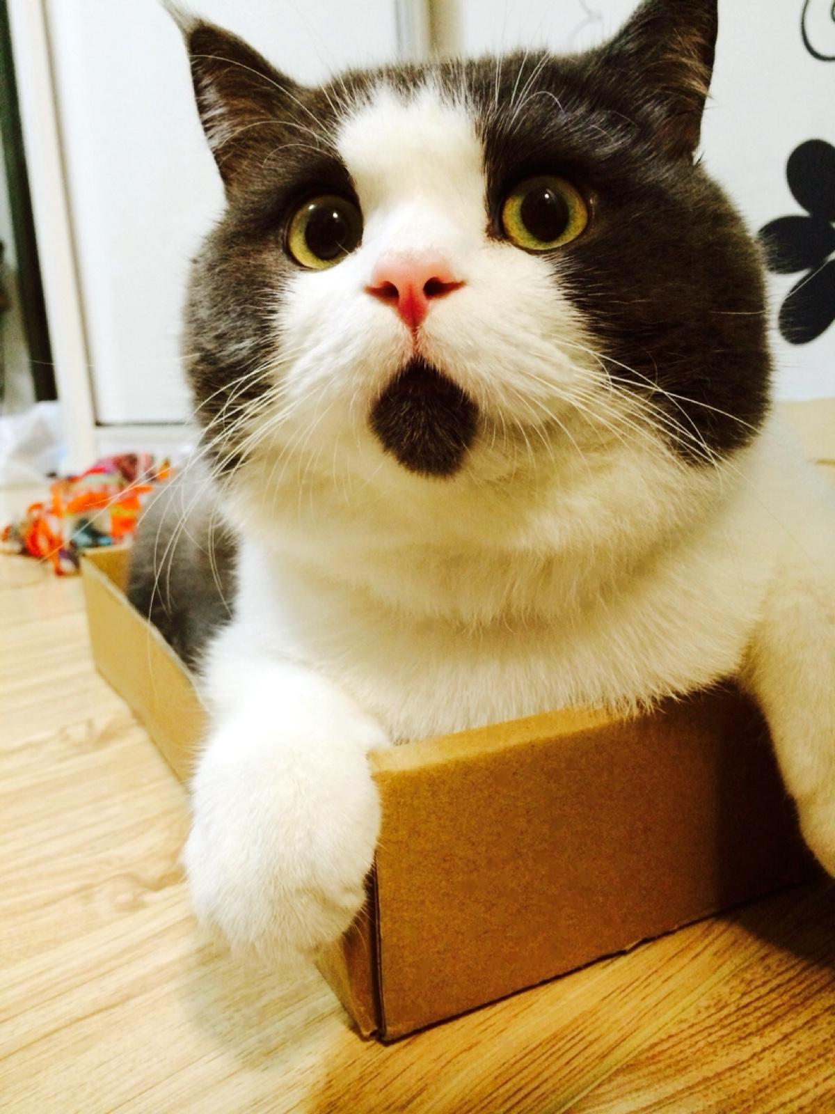 gato_sorprendido_4