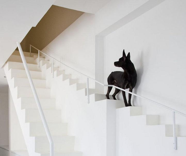 escalera_para_mascotas_2