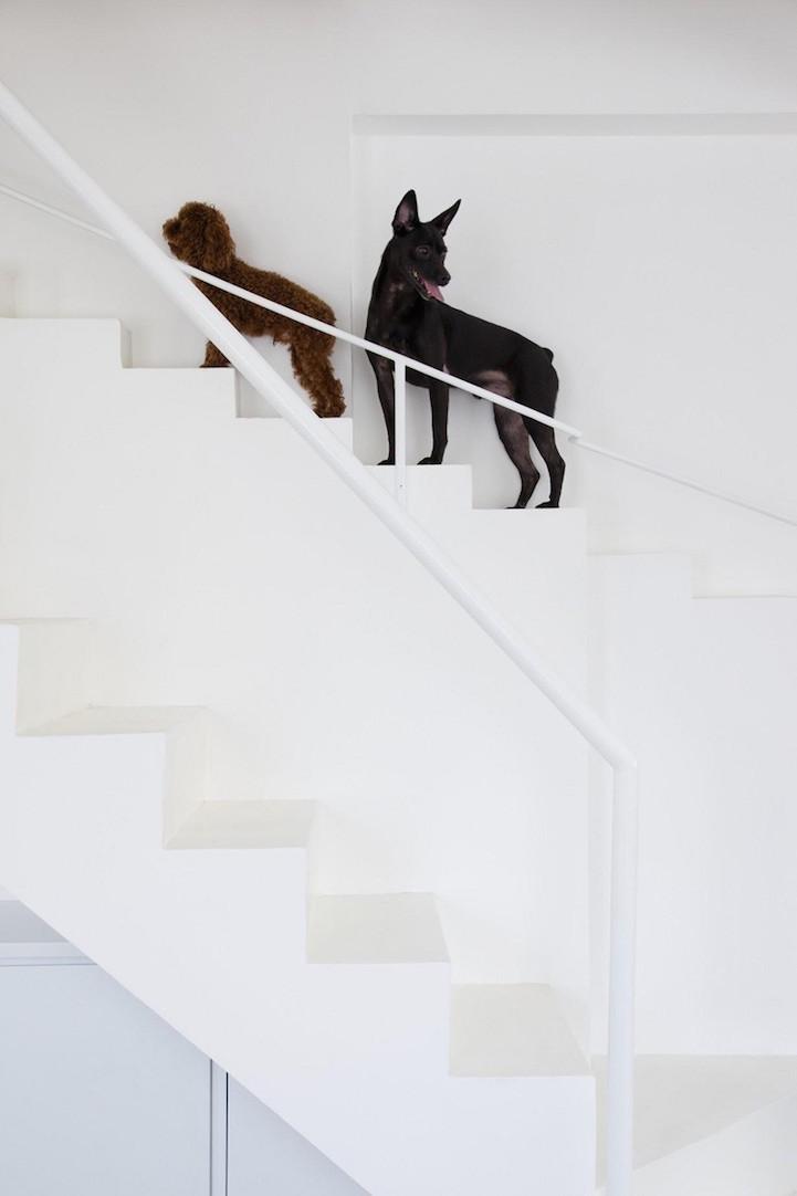 escalera_para_mascotas_4