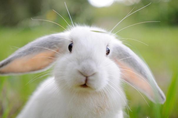 conejos_tiernos_1