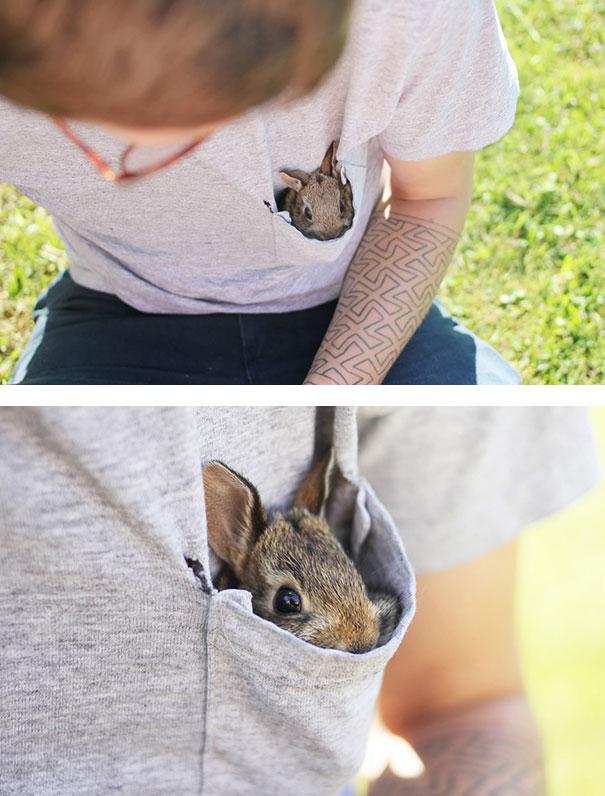 conejos_tiernos_11