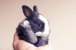 conejos_tiernos_17