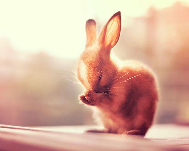 conejos_tiernos_18