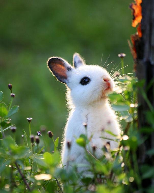 conejos_tiernos_20