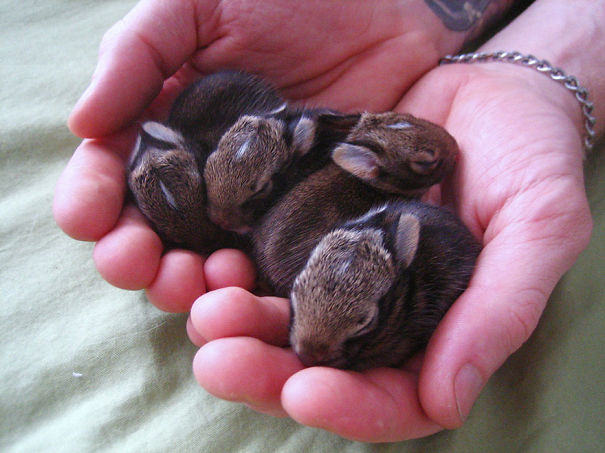 conejos_tiernos_3