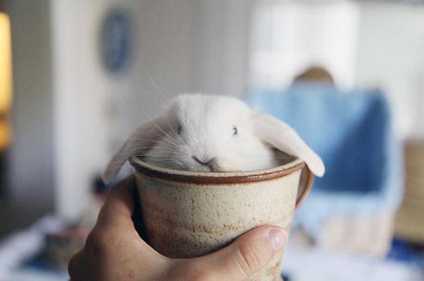 conejos_tiernos_5