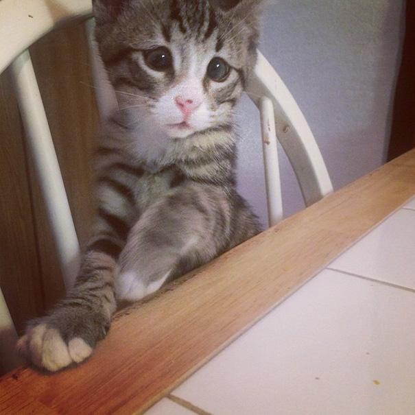 gatito_mirada_triste_2