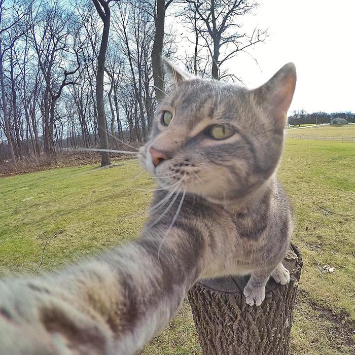 gato_selfie_2