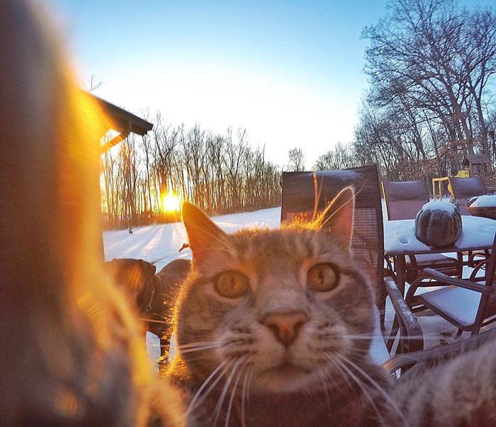 gato_selfie_3