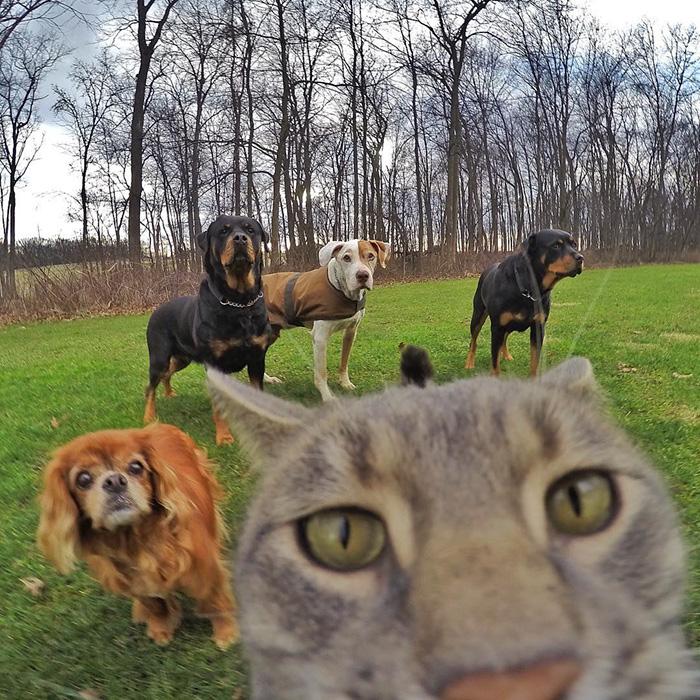 gato_selfie_5