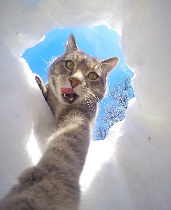 gato_selfie_6