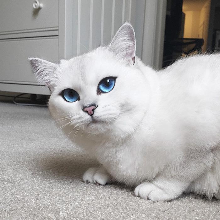 gato_ojos_hermosos_10