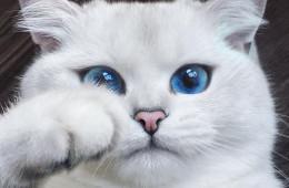 gato_ojos_hermosos_12