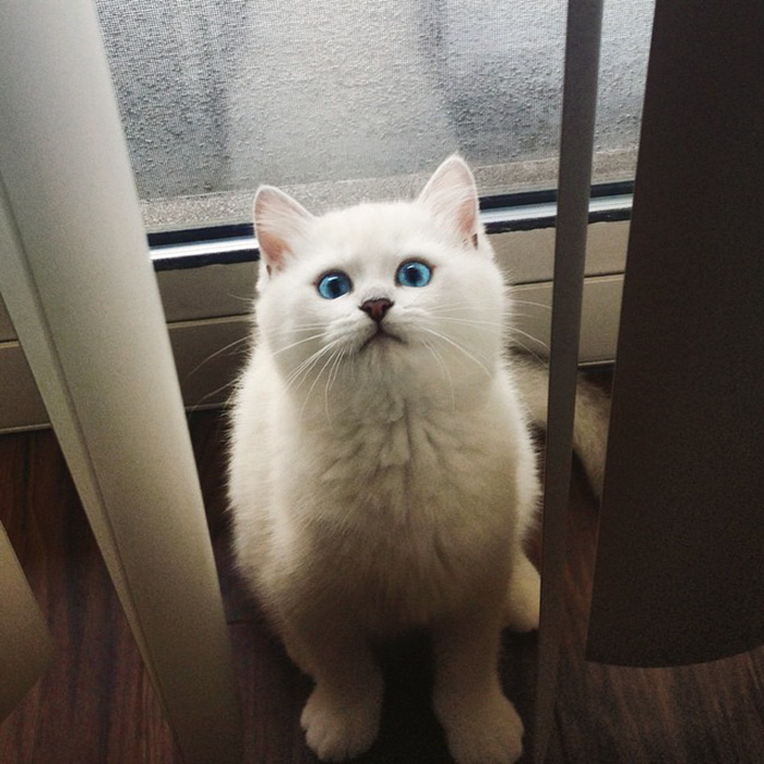 gato_ojos_hermosos_16