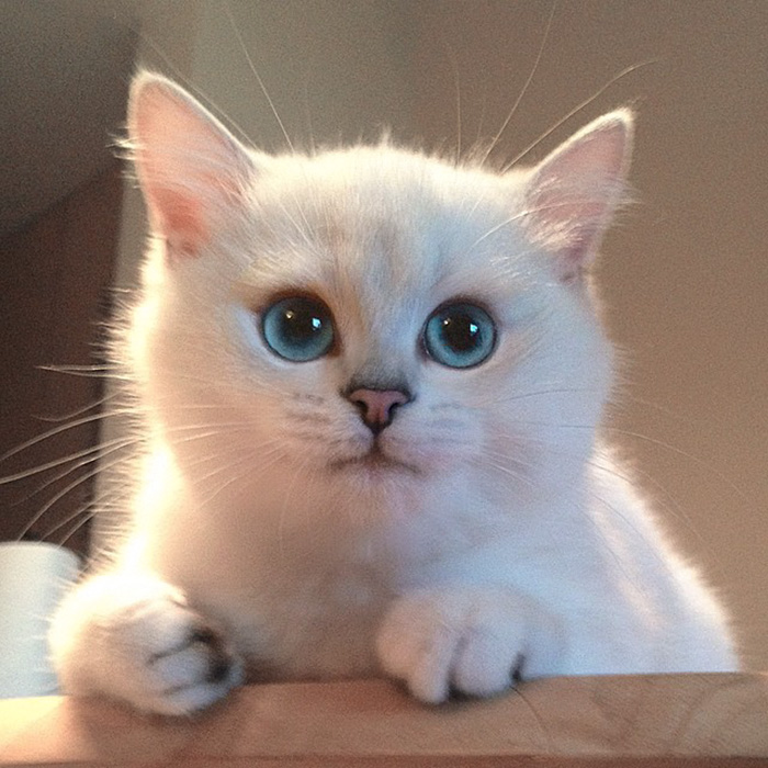 gato_ojos_hermosos_17