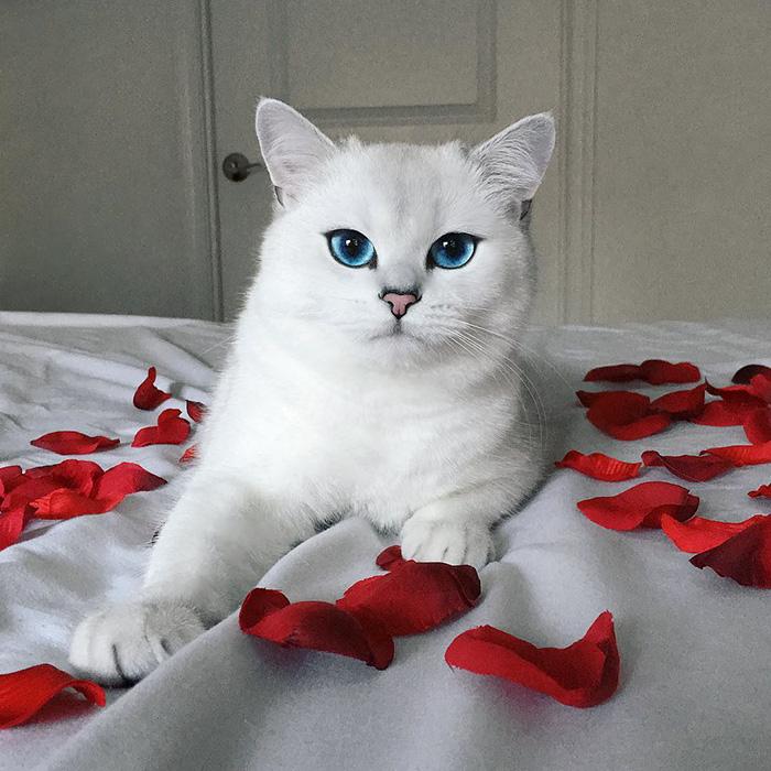 gato_ojos_hermosos_2