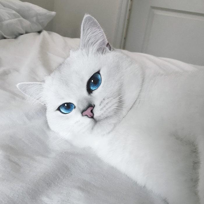 gato_ojos_hermosos_3