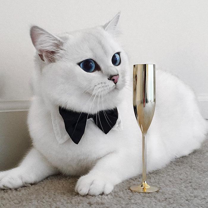 gato_ojos_hermosos_7