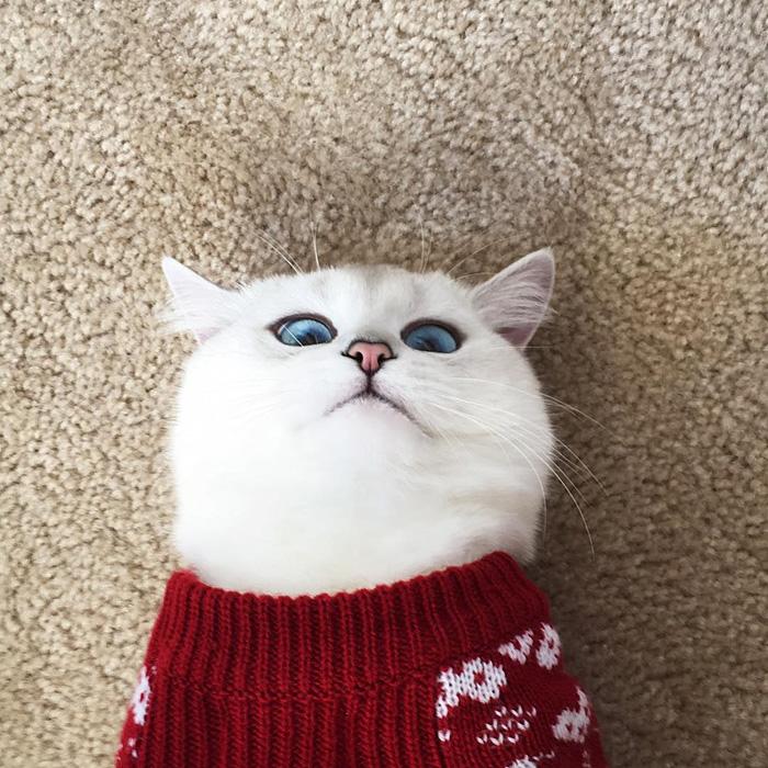 gato_ojos_hermosos_8