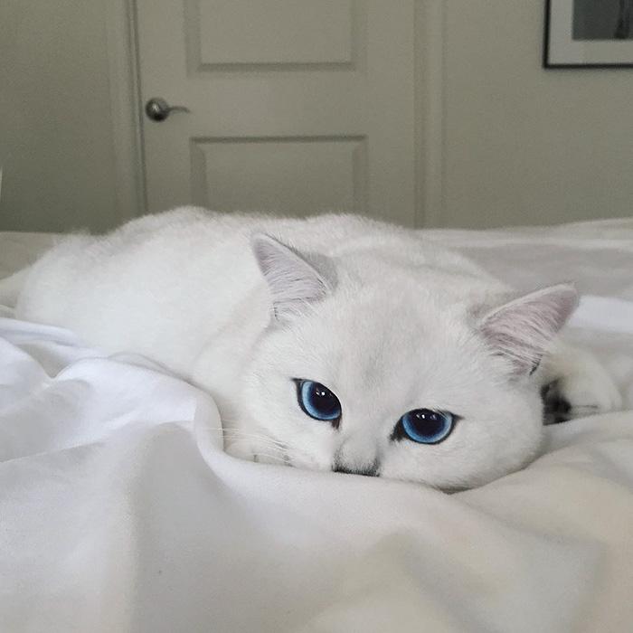 gato_ojos_hermosos_9