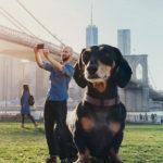 Vivian, el perro gigante de Brooklyn