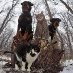 40 espectaculares fotos de animales que posan para la cámara