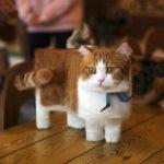 Fotos de animales retocadas parecen criaturas de Minecraft en la vida real