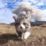 Nyankichi es uno de los gatos más fotogénicos de internet