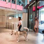 En Ogilvy Barcelona podés ir a trabajar con tu mascota
