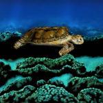 Increíble bodypainting convierte a una mujer en tortuga marina