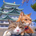 Dos gatos aventureros viajan por todo Japón junto a un humano